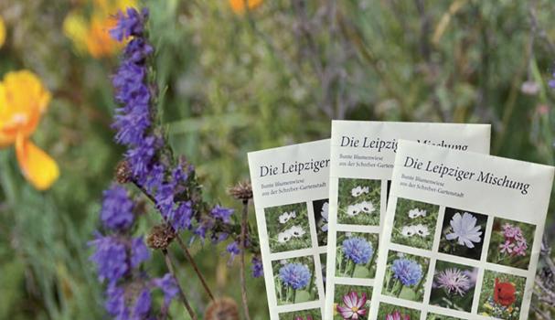 Blumenwiese und drei Samentütchen