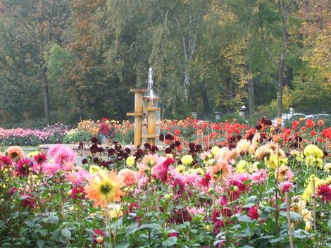 Dahliengarten vor einem Springbrunnen