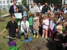 Gruppe von Kindern, Eltern und HelferInnen pflanzen einen Zuckertütenbaum im Kindergarten