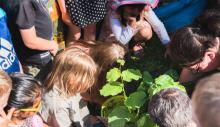 Kinder pflanzen eine Linde