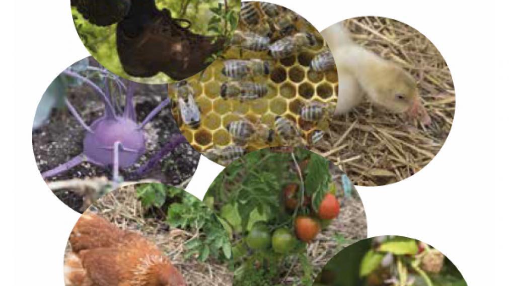 Fotos verschiedener Lebensmittel wie Honig und Gemüse