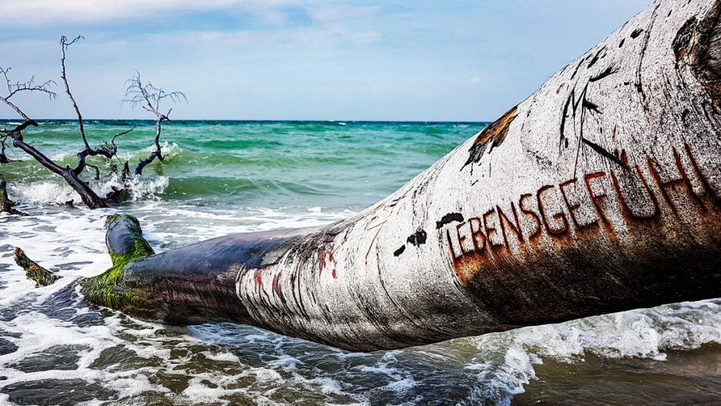 Baumstamm am Meeresufer. Text in der Rinde: Lebensgefuehl