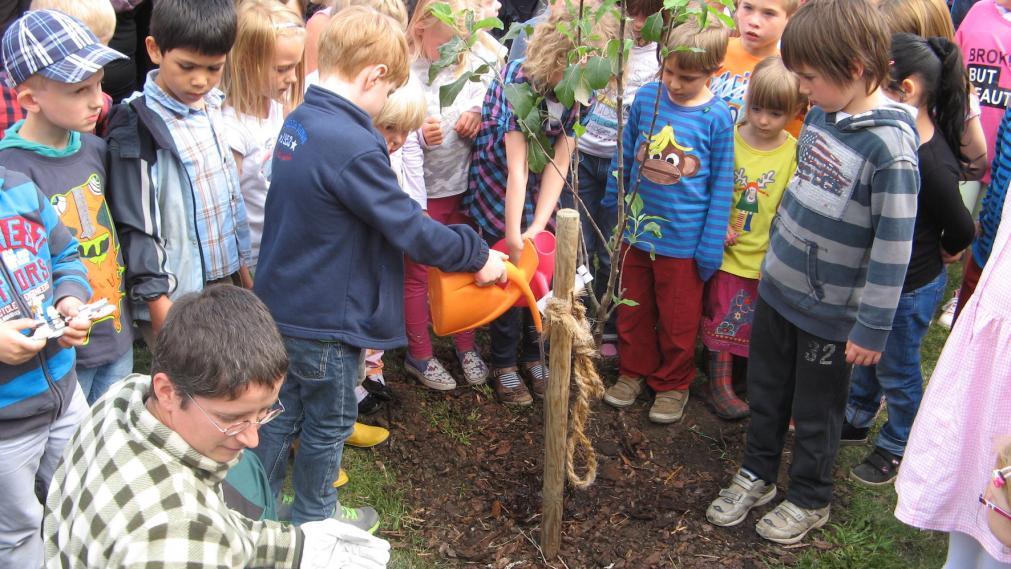 Es wird ein Zuckertütenbaum gepflanzt